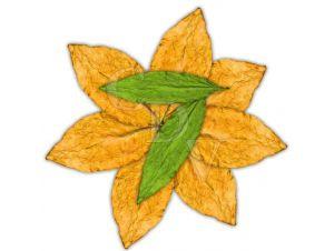 Flavour Art 7 Leaves