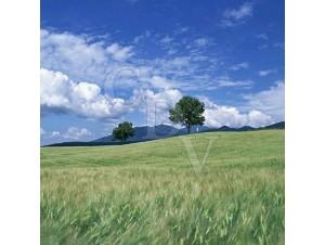 Arôme Usa Mix - 30ml