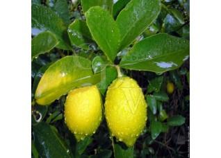 Arôme Citron - 5ml